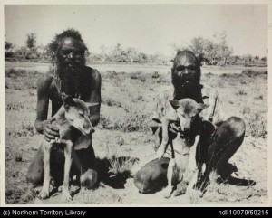 Native Australian men with dingoes
